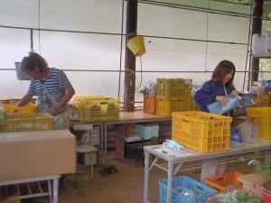 ★野菜の出荷