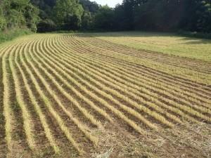 大麦成人跡