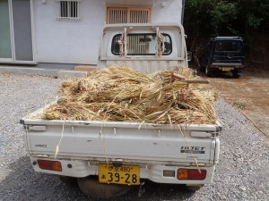 花子の大麦