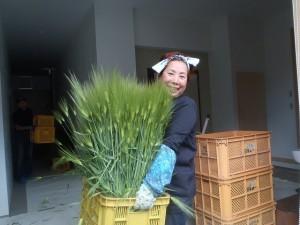 大麦と由井先生