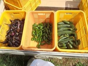 11出荷用野菜