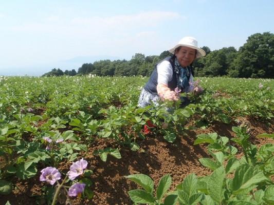 由井会長・ジャガ芋畑にて①紫のはなが花標津。白い花がトヨシロ