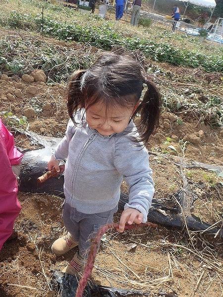 サツマ芋掘り②