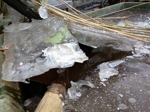 朝、氷が張っていた