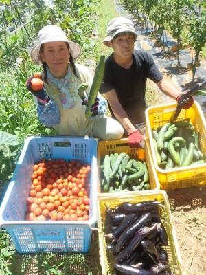G面の夏野菜を収穫①