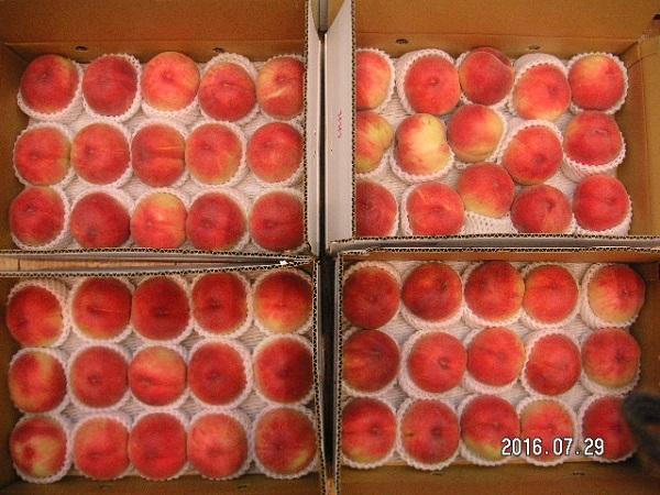 ②桃:15個×4箱%u300020160729着